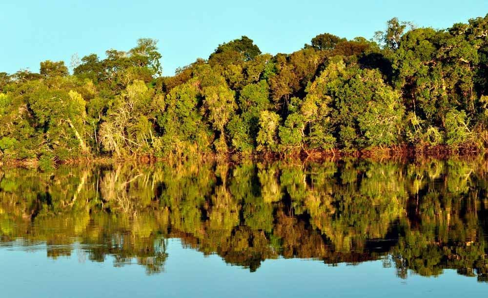 As florestas tropicais são as mais ameaçadas pelas indústrias extrativistas