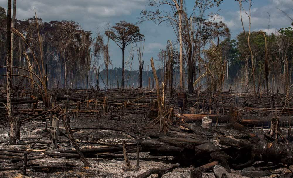 Queimada na Flona do Tapajós: combinação gera emissão recorde de carbono