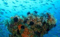 A biodiversidade e o cuidado com os oceanos é uma das diretrizes para as metas de 2030 (Mauricio Handler/Getty/AFP)