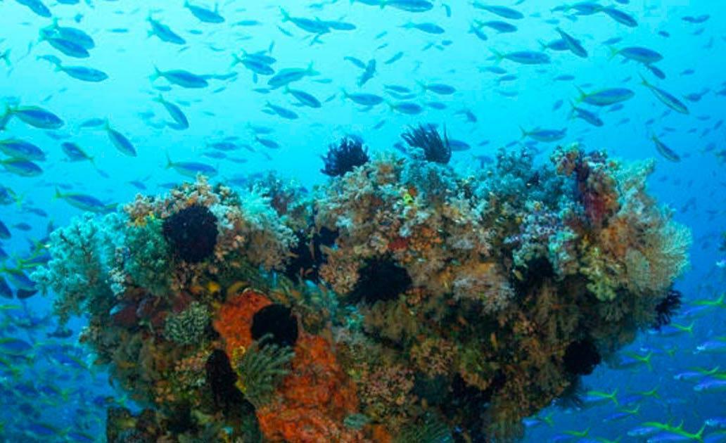 A biodiversidade e o cuidado com os oceanos é uma das diretrizes para as metas de 2030