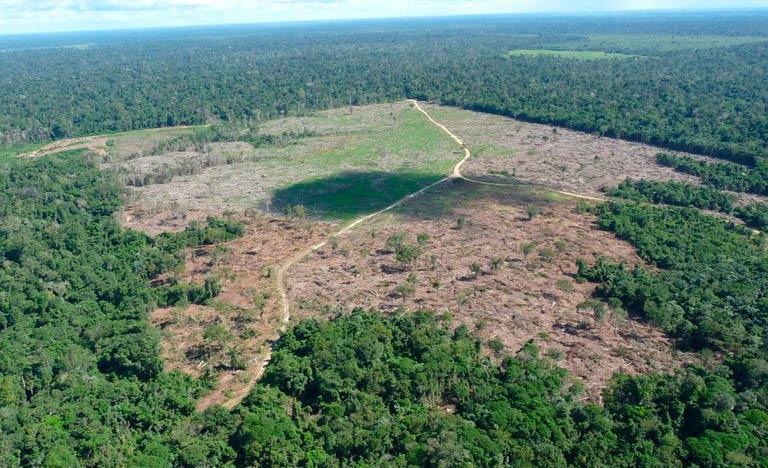 Desmatamento recorde e ação de garimpeiros são os maiores problemas da falta de ação do governo