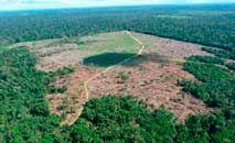 Desmatamento recorde e ação de garimpeiros são os maiores problemas da falta de ação do governo (Ibama)