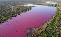 Vista aérea de uma lagoa que ficou rosa por causa de um produto químico usado para ajudar na conservação de camarões em empresas pesqueiras próximos a Trelew, na província patagônica de Chubut, Argentina, em 23 de julho de 2021 (DANIEL FELDMAN/AFP)