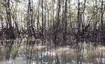 Essas áreas sequestram 57% mais carbono do que outros tipos de vegetação tropical (Pablo Pires Fernandes/Dom Total)