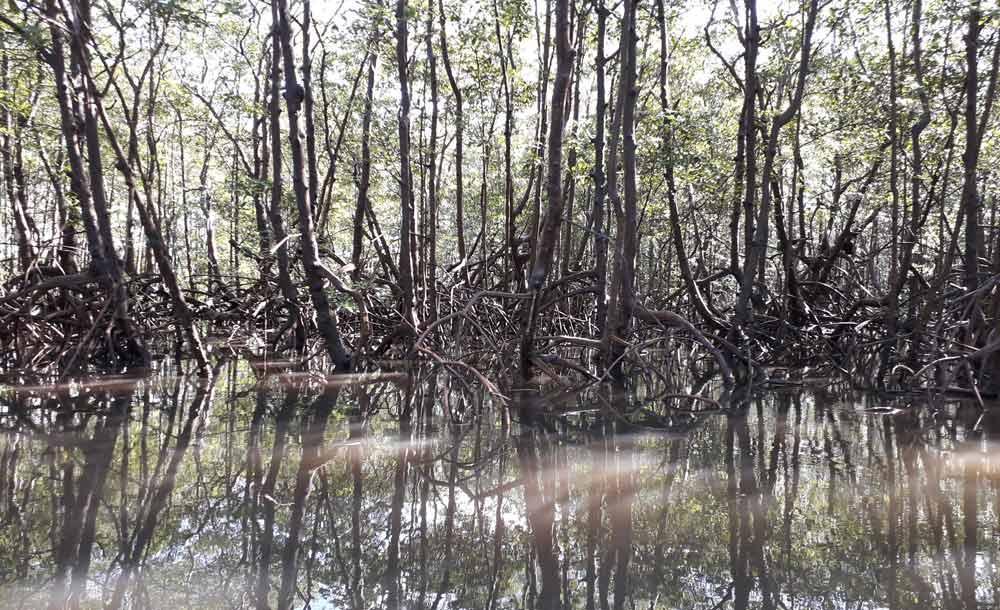 Essas áreas sequestram 57% mais carbono do que outros tipos de vegetação tropical