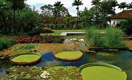 Local guarda mais de 3,5 mil espécies de plantas tropicais e subtropicais (Divulgação)