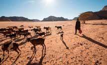 Pastor com suas cabras no distrito de Ghast, na Líbia, que se tornou deserto nos últimos100 anos (Taha Jawashi/AFP)