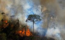 Incêndio ilegal na Floresta Amazônica em agosto de 2020 (CARL DE SOUZA/AFP)