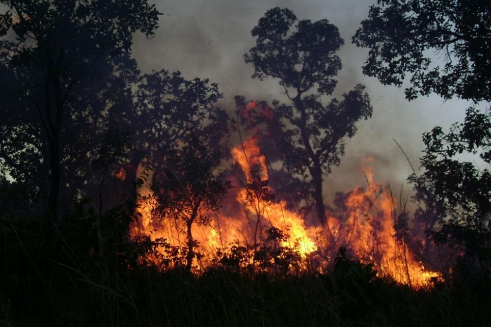 Fogo controlado na Área de Proteção Ambiental do Jalapão, no Tocantins