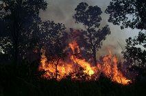 Fogo controlado na Área de Proteção Ambiental do Jalapão, no Tocantins (Vânia Pivello/IB-USP)