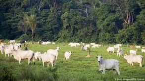 Especialistas dizem ser possível zerar desmatamento sem perdas econômicas (afp)