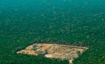 Mudança na lei é criticada por ambientalistas, que consideram risco à preservação de florestas e biomas (AFP)