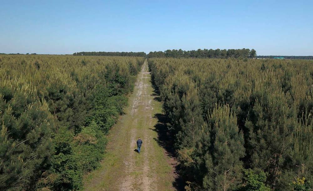 Reflorestamento e manutenção de matas nativas é fundamental para a captura de CO2