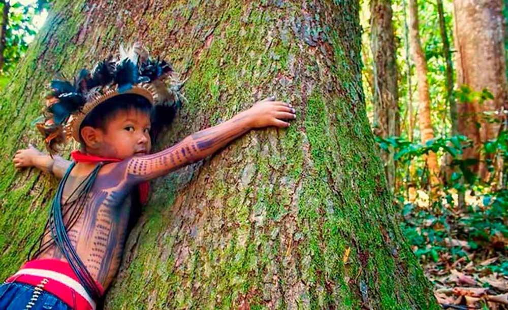 Povos originários mantêm relação mais direta com o meio ambiente e são considerados guardiões das florestas