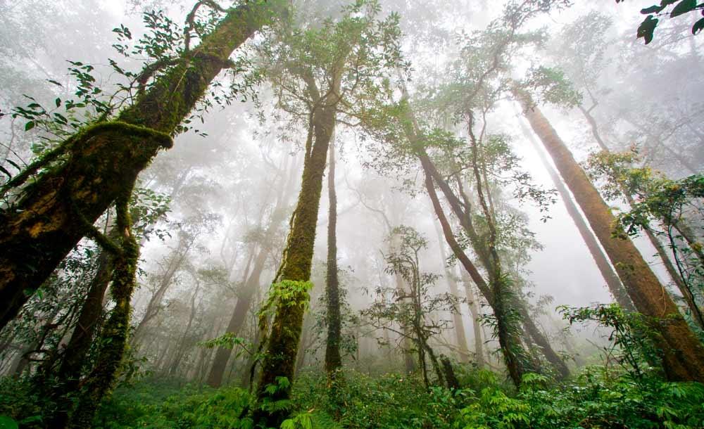 Florestas tropicais são as que mais guardam diversidade no mundo