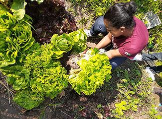 Horta produzia na Escola General Carneiro utilizando a compostagem. (Arquivo Pessoal / Movimento Ecos)