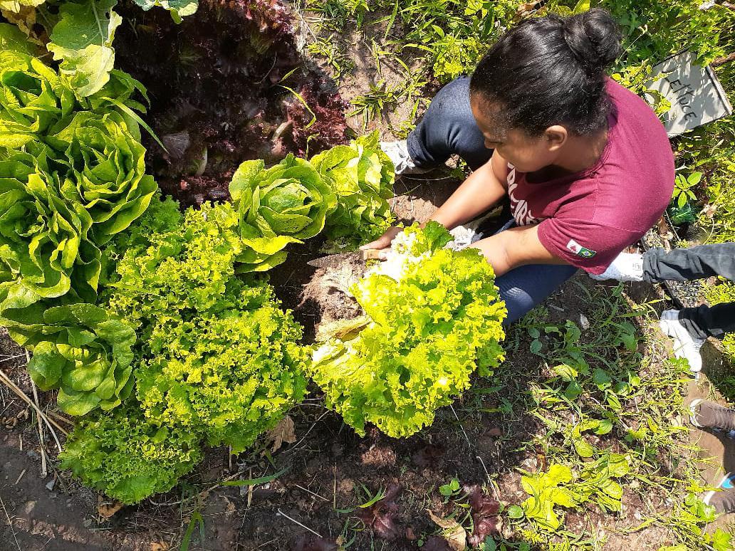 Horta produzia na Escola General Carneiro utilizando a compostagem.
