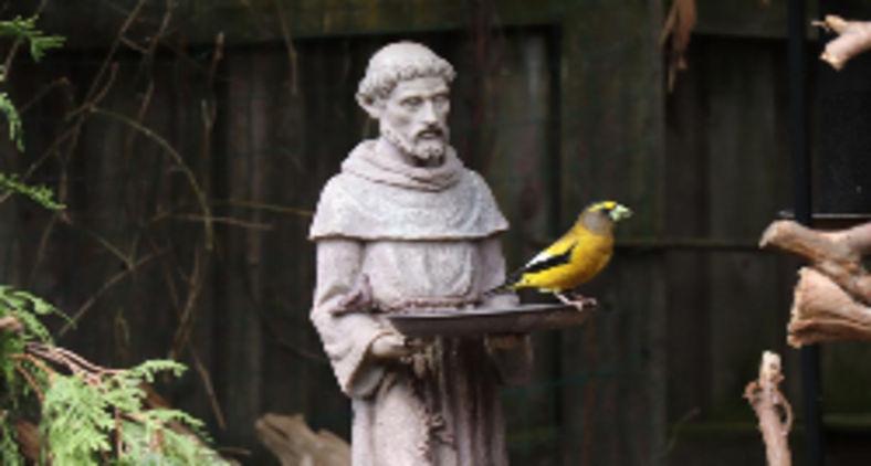 Francisco compreendeu o mistério da compaixão cristalina, demonstração da vontade divina (Unsplash/Sandi Mager)