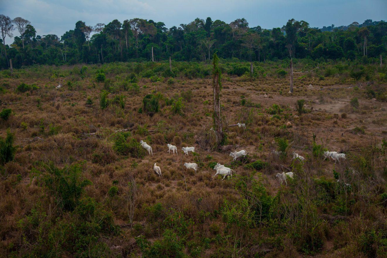 Dos 44 milhões desmatados entre 1985-2020, 99% foi convertido para uso agropecuário