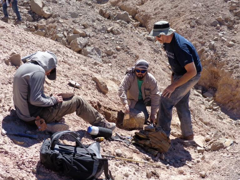 Grupo de cientistas trabalha na descoberta e identificação de fósseis de um pterossauro no deserto do Atacama, no norte do Chile