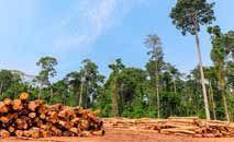 Exploração ilegal de madeira aumenta no Pará, aumentando a degradação da floresta (Inmazon)
