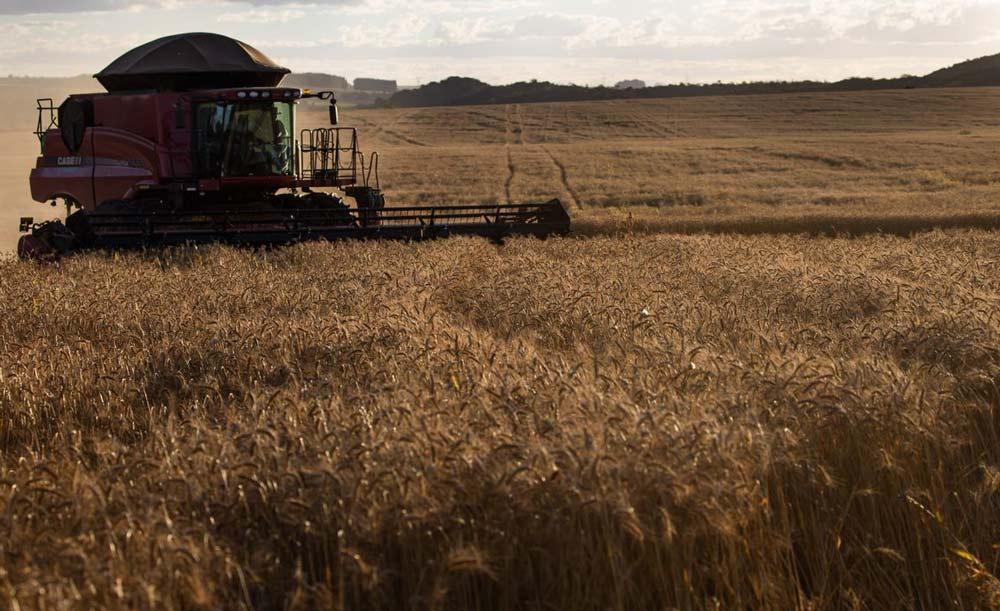 Produção do agronegócio pode cair em um terço caso o desmatamento continue no ritmo atual