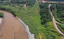 Animais como jaguatiricas e pacas foram vistos transitando novamente pela área (Divulgação/Vale)