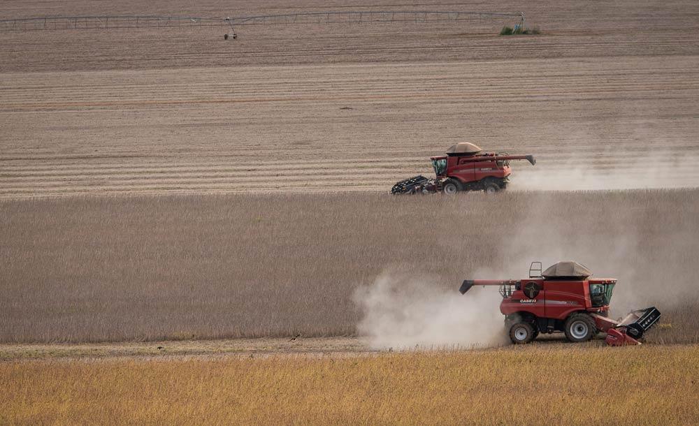 A expansão da soja no Pampa é a principal responsável pela perda de vegetação nativa