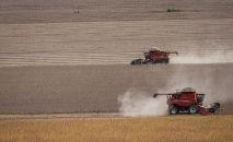A expansão da soja no Pampa é a principal responsável pela perda de vegetação nativa (Wenderson Araújo/CNA)