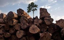 Ministério do Meio Ambiente deu andamento ao pedido dos empresários (Marizilda Gruppe/Greenpeace)