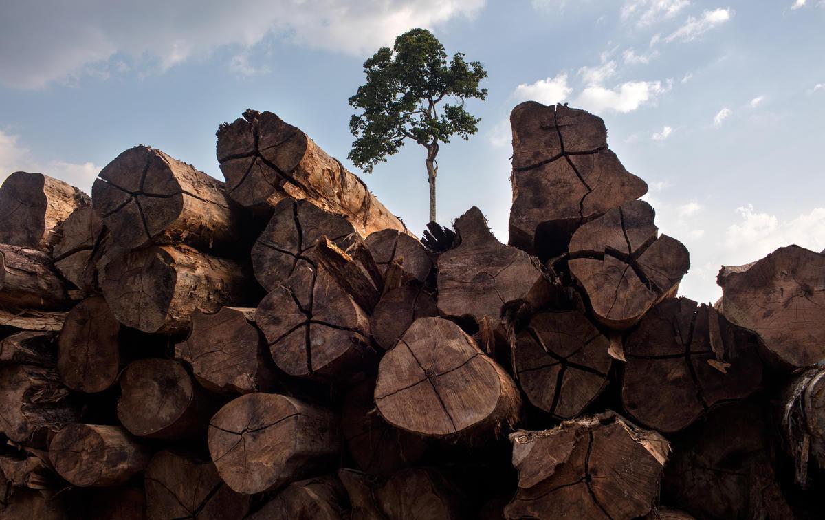 Ministério do Meio Ambiente deu andamento ao pedido dos empresários