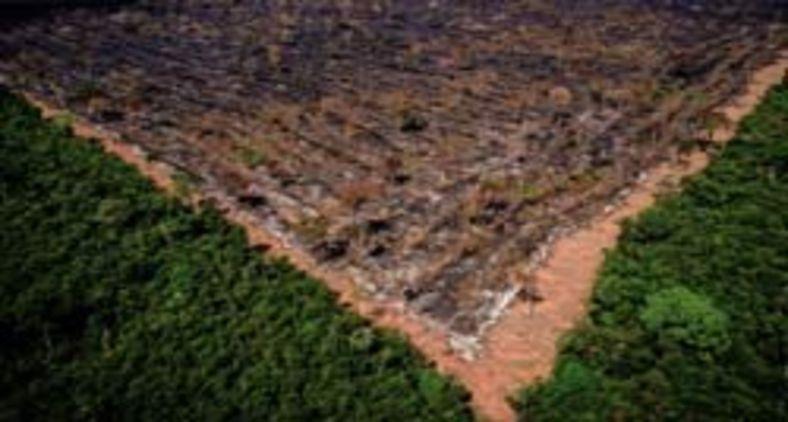 Desmatamento teme feitos perversos no regime de chuvas e afeta a agricultura (Mayke Toscano/Ibama-MT)