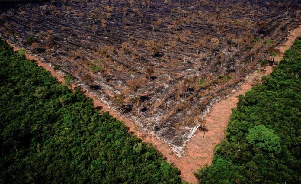 Desmatamento teme feitos perversos no regime de chuvas e afeta a agricultura