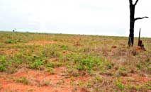 Foco do projeto será especialmente em áreas que não são de restauração obrigatória como pastos degradados (Ambiente Inteiro/Divulgação)