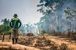 Propostas de empresários foram bastante criticadas por ambientalistas (Vinícius Mendonça/Ibama/Divulgação)