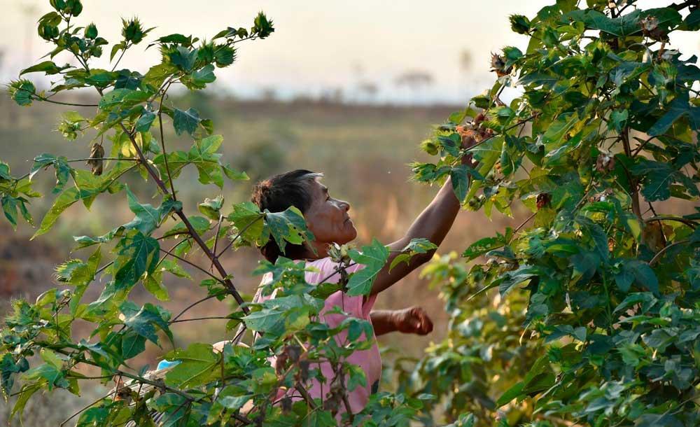 Mulheres indígenas coletaram o recorde de mais de 1 tonelada de sementes em 2020