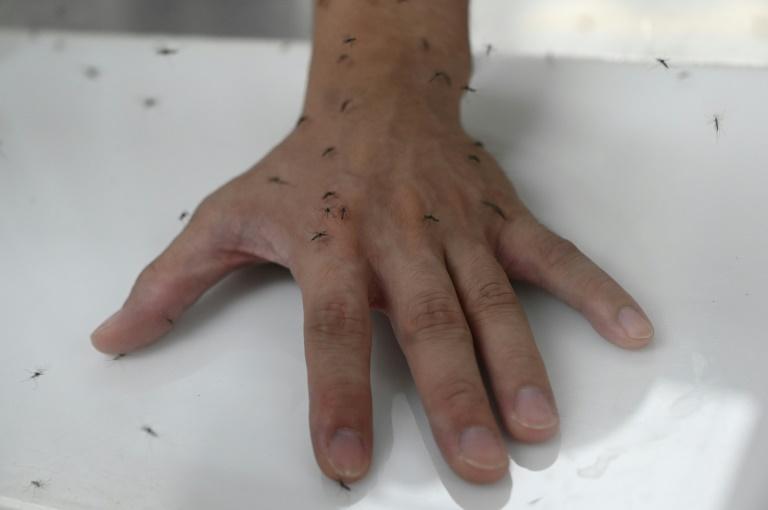 A dengue é transmitida pelo mosquito aedes aegypti e afeta quase 100 milhões de pessoas todos os anos em todo o mundo