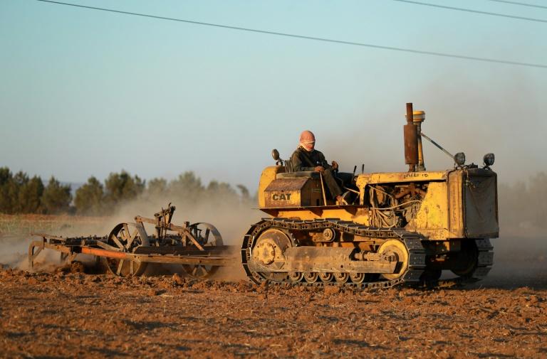 Um fazendeiro ara campo de trigo no interior da cidade de Qamishli, no nordeste da Síria, em 18 de setembro de 2021