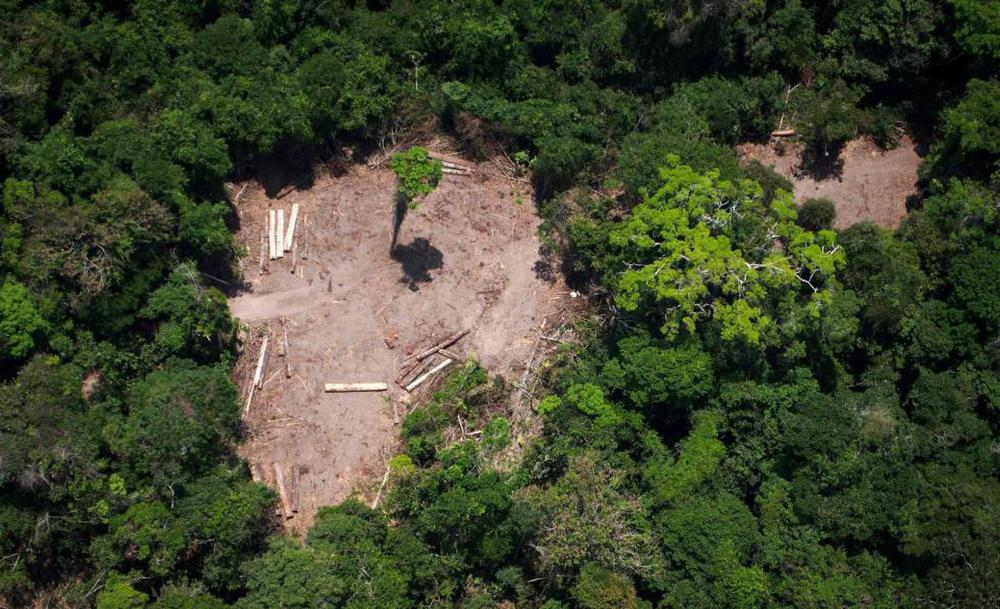 Reportagem revelou a existência no Facebook Marketplace de inúmeros anúncios propondo a venda de parcelas da floresta amazônica de até várias centenas de hectares de forma totalmente ilegal