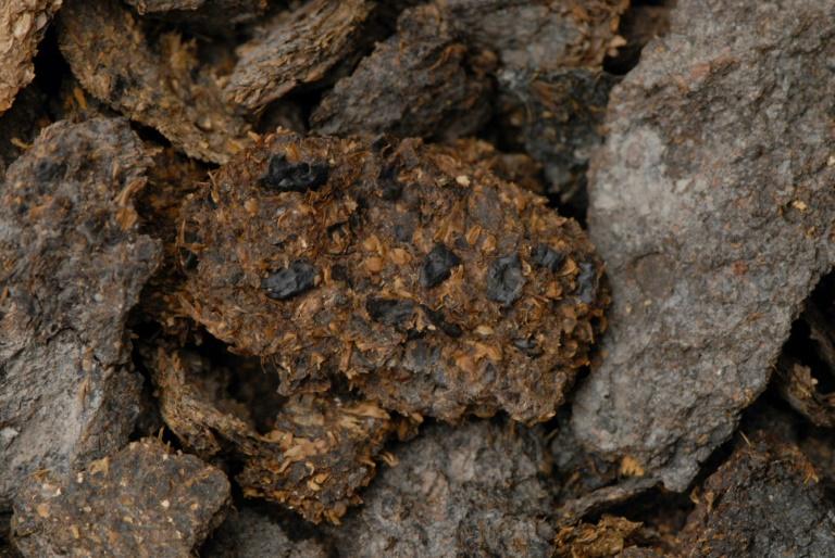 Excremento humano com cerca de 2,7 mil anos de antiguidade, procedente das minas de sal de Hallstatt