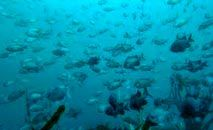 Arquipélago de Humboldt na costa de Punta Choros, em La Higuera, no Chile, reúne espécies em risco de extinção (Alberto Peã'a/AFP)