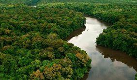 Estudo foi realizado em Manaus pela Fundação Amazônia Sustentável (FAS) (ABr)
