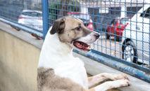 Até o momento foram avaliados 55 animais, sendo 45 cães e 10 gatos (Prefeitura do Rio)