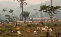 Avanço das pastagens na Amazônia são uma das grandes fontes de desmatamento (Greenpeace)