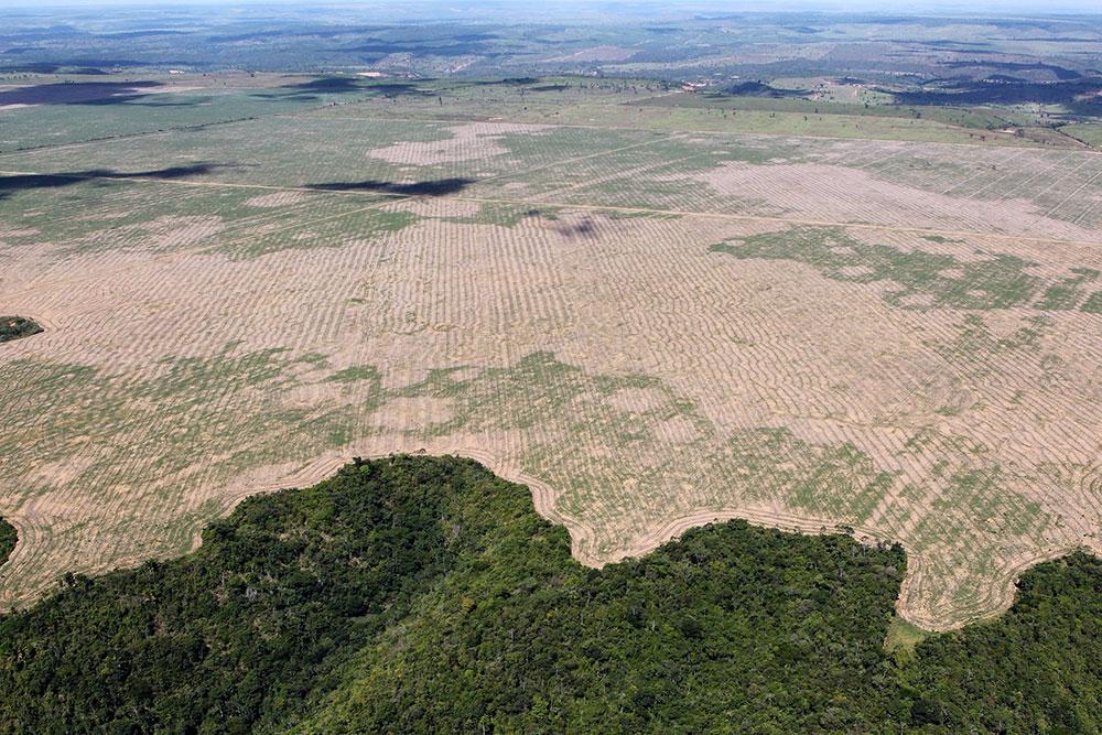 pecuária extensiva e o cultivo de monoculturas estão associadas à rápida perda de biodiversidade e a uma alta incidência de doenças tropicais negligenciadas
