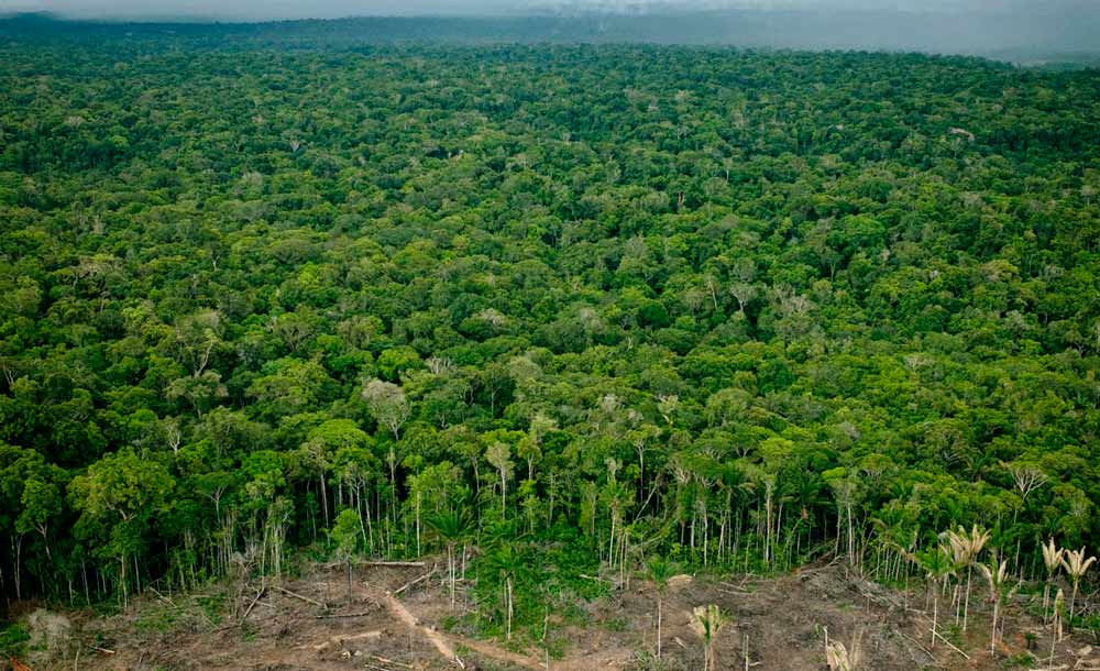 Desmatamento na Amazônia bate níveis recordes (Per-Anders Pettersson/Getty Images/AFP)