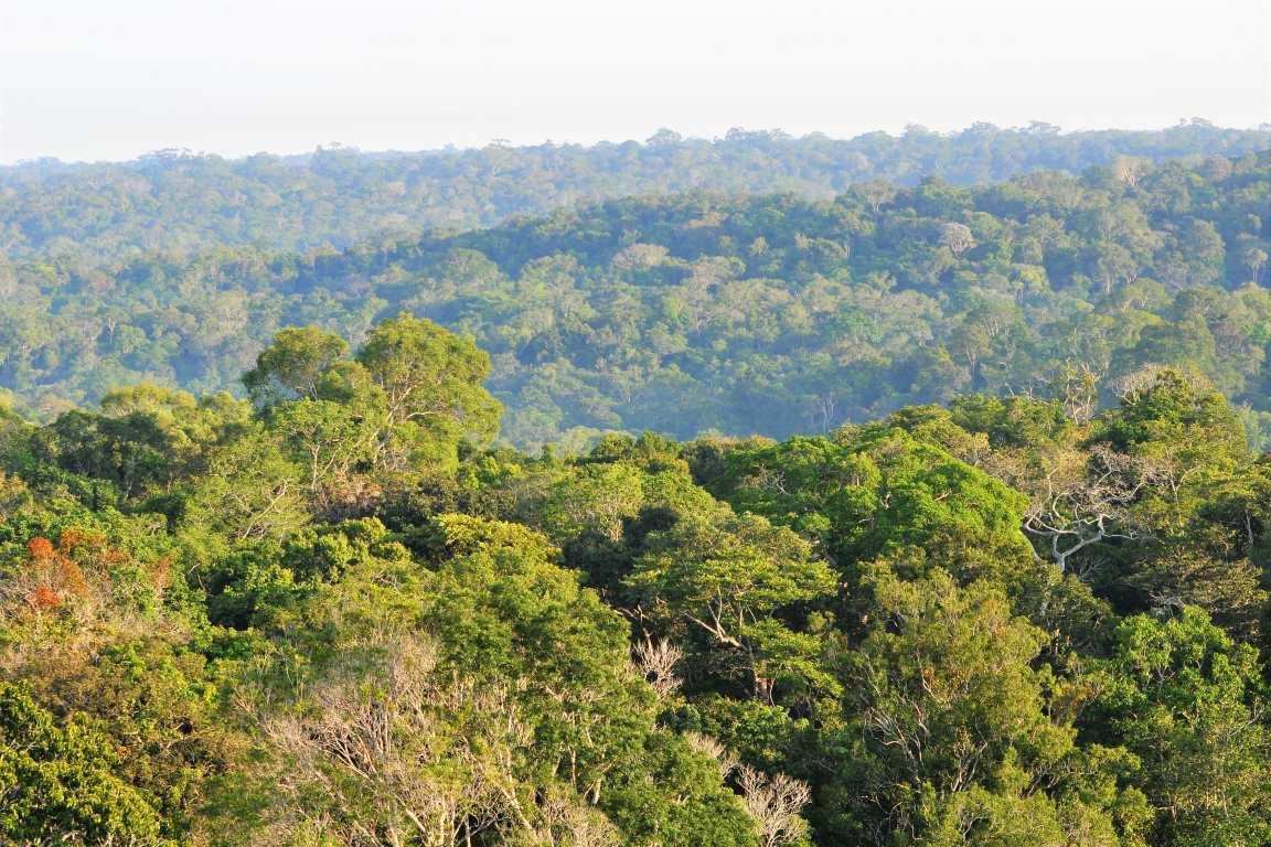 Floresta amazônica: governo Bolsonaro, que comprou briga com fundos internacionais, aposta nos projetos voluntários de REED+